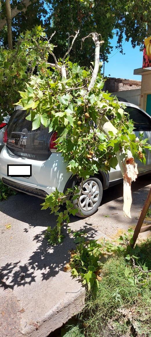 1612643779089Auto golpeado por un arbol - copia